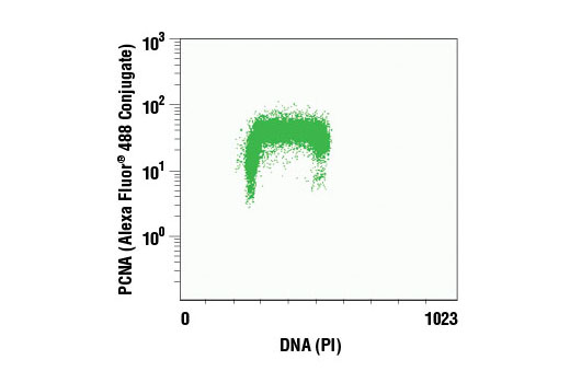 Flow cytometric analysis of Jurkat cells using PCNA (PC10) Mouse mAb (Alexa Fluor<sup>®</sup> 488 Conjugate) and propidium iodide (DNA content).