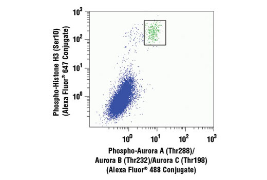 Monoclonal Antibody Flow Cytometry Mitosis