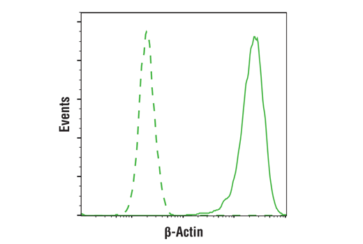 Flow cytometric analysis of HeLa cells using β-Actin (D6A8) Rabbit mAb (solid line) compared to concentration-matched Rabbit (DA1E) mAb IgG XP<sup>® </sup>Isotype control #3900 (dashed line). Anti-rabbit IgG (H+L), F(ab')<sub>2</sub> Fragment (Alexa Fluor<sup>®</sup> 488 Conjugate) #4412 was used as a secondary antibody.