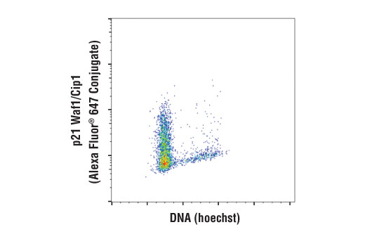 Flow cytometric analysis of MCF7 cells using p21 Waf1/Cip1 (12D1) Rabbit mAb (Alexa Fluor® 647 Conjugate) versus Hoechst (DNA content).