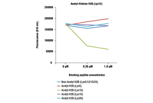 Acetyl-Histone H2B (Lys12) (D7H4) Rabbit mAb specificity was determined by peptide ELISA. The graph depicts the binding of the antibody to pre-coated acetyl-histone H2B (Lys12) peptide in the presence of increasing concentrations of various competitor peptides. As shown, only the acetyl-histone H2B (Lys12) peptide competed away binding of the antibody.