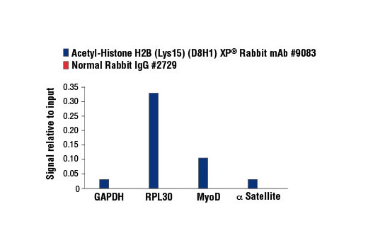 Chromatin immunoprecipitations were performed with cross-linked chromatin from HeLa cells and either Acetyl-Histone H2B (Lys15) (D8H1) XP<sup>®</sup> Rabbit mAb, or Normal Rabbit IgG #2729, using SimpleChIP<sup>®</sup> Enzymatic Chromatin IP Kit (Magnetic Beads) #9003. The enriched DNA was quantified by real-time PCR using SimpleChIP<sup>®</sup> Human GAPDH Exon 1 Primers #5516, SimpleChIP® Human RPL30 Exon 3 Primers #7014, SimpleChIP<sup>®</sup> Human MyoD1 Exon 1 Primers #4490, and SimpleChIP<sup>®</sup> Human α Satellite Repeat Primers #4486. The amount of immunoprecipitated DNA in each sample is represented as signal relative to the total amount of input chromatin, which is equivalent to one.