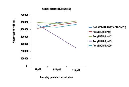 Acetyl-Histone H2B (Lys15) (D8H1) XP<sup>®</sup> Rabbit mAb specificity was determined by peptide ELISA. The graph depicts the binding of the antibody to pre-coated acetyl-histone H2B (Lys15) peptide in the presence of increasing concentrations of various competitor peptides. As shown, only the acetyl-histone H2B (Lys15) peptide competed away binding of the antibody.