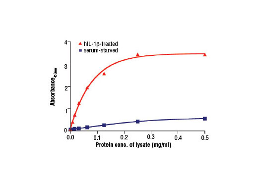 Figure 2. The relationship between the protein concentration of lysates from CCD-1070Sk cells, serum starved or hIL-1β-treated, and the absorbance at 450 nm is shown. CCD-1070Sk cells (80-90% confluent) were serum starved or treated with hIL-1β #8900 (5 ng/ml, 16 hr) and then lysed.