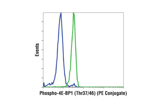 Flow cytometric analysis of Jurkat cells, untreated (green) or treated with LY294002 #9901, Wortmannin #9951, and U0126 #9903 (blue), using Phospho-4E-BP1 (Thr37/46) (236B4) Rabbit mAb (PE Conjugate).