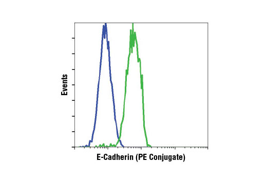 Flow cytometric analysis of HeLa (blue) and MCF7 (green) cells using E-Cadherin (24E10) Rabbit mAb (PE Conjugate).