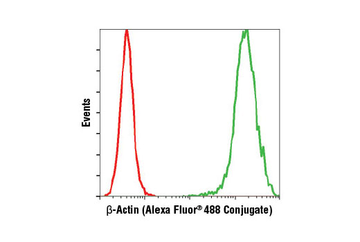 Flow cytometric analysis of HeLa cells using β-Actin (13E5) Rabbit mAb (Alexa Fluor<sup>®</sup> 488 Conjugate) (green) compared to concentration-matched Rabbit (DA1E) mAb IgG XP<sup>®</sup> Isotype Control (Alexa Fluor<sup>®</sup> 488 Conjugate) #2975 (red).