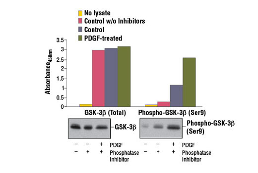 Figure 1. Treatment of NIH/3T3 cells with hPDGF-BB #8912 stimulates phosphorylation of GSK-3β at Ser9, as detected by PathScan<sup>®</sup> Phospho-GSK-3β (Ser9) Sandwich ELISA Kit #7311, but does not affect levels of total GSK-3β protein detected by PathScan<sup>®</sup> Total GSK-3β Sandwich ELISA Kit #7265. The absorbance readings at 450 nm are shown in the upper figure, while the corresponding western blots using GSK-3β (27C10) Rabbit mAb #9315 (left panel) or Phospho-GSK-3β (Ser9) (D85E12) XP<sup>®</sup> Rabbit mAb #5558 (right panel) is shown in the lower figure.