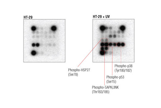 Image 3: PathScan® Intracellular Signaling Array Kit (Chemiluminescent Readout)