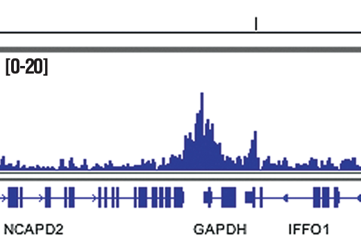 Chromatin IP-seq Image 9