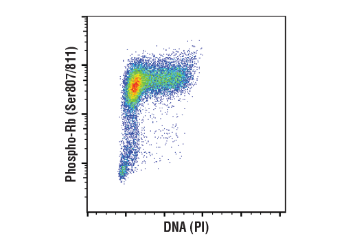 Image 4: Cell Cycle/Checkpoint Antibody Sampler Kit