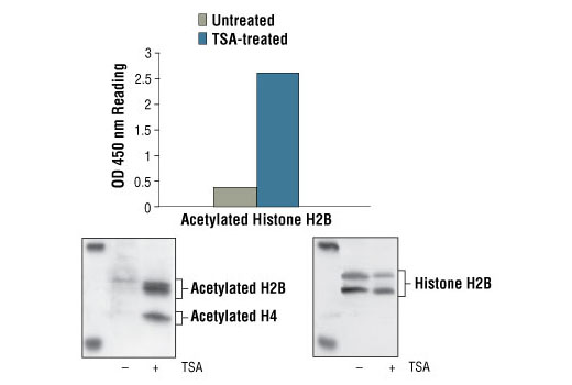 Image 1: PathScan® Acetyl-Histone H2B Sandwich ELISA Kit