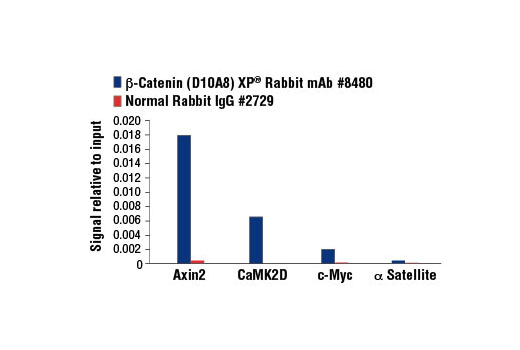 Chromatin immunoprecipitations were performed with cross-linked chromatin from HCT 116 cells and either β-Catenin (D10A8) XP<sup>®</sup> Rabbit mAb or Normal Rabbit IgG #2729 using SimpleChIP<sup>®</sup> Enzymatic Chromatin IP Kit (Magnetic Beads) #9003. The enriched DNA was quantified by real-time PCR using SimpleChIP<sup>® </sup>Human Axin2 Intron 1 Primers #8973, SimpleChIP<sup>® </sup>Human CaMK2D Intron 3 Primers #5111, human c-Myc promoter primers, and SimpleChIP<sup>®</sup> Human α Satellite Repeat Primers #4486. The amount of immunoprecipitated DNA in each sample is represented as signal relative to the total amount of input chromatin, which is equivalent to one.