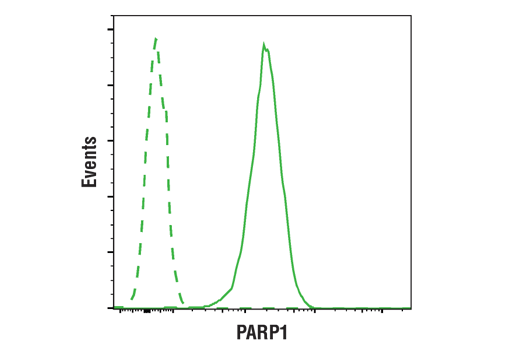 Flow cytometric analysis of Jurkat cells using PARP (46D11) Rabbit mAb (solid line) compared to concentration-matched Rabbit (DA1E) mAb IgG XP® Isotype Control #3900 (dashed line). Anti-rabbit IgG (H+L), F(ab')2 Fragment (Alexa Fluor® 488 Conjugate) #4412 was used as a secondary antibody.