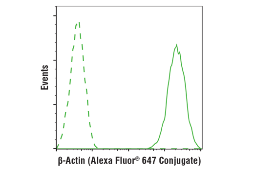 Flow cytometric analysis of Hela cells using β-Actin (13E5) Rabbit mAb (Alexa Fluor® 647 Conjugate) (solid line) compared to concentration-matched Rabbit (DA1E) mAb IgG XP<sup>®</sup> Isotype Control (Alexa Fluor<sup>®</sup> 647 Conjugate) #2985 (dashed line).
