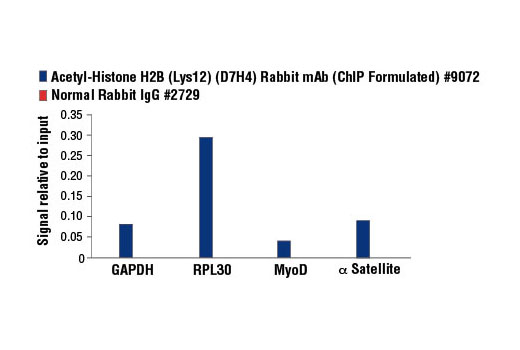Chromatin Immunoprecipitation Image 1: Acetyl-Histone H2B (Lys12) (D7H4) Rabbit mAb (ChIP Formulated)