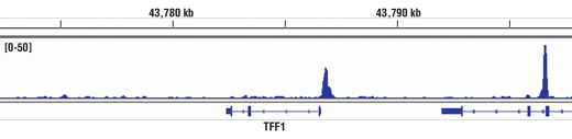 Chromatin immunoprecipitations were performed with cross-linked chromatin from MCF7 cells grown in phenol red free medium and 5% charcoal stripped FBS for 4 d then treated with β-estradiol (10 nM) for 45 minutes and Estrogen Receptor α (D8H8) Rabbit mAb, using SimpleChIP<sup>®</sup> Enzymatic Chromatin IP Kit (Magnetic Beads) #9003. DNA Libraries were prepared using SimpleChIP<sup>®</sup> ChIP-seq DNA Library Prep Kit for Illumina<sup>®</sup> #56795. The figure shows binding across TFF1/pS2, a known target gene of Estrogen Receptor α (see additional figure containing ChIP-qPCR data). For additional ChIP-seq tracks, please download the product data sheet.