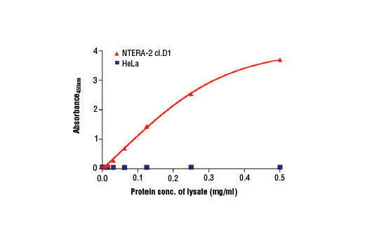 Figure 2. The relationship between the protein concentration of lysates from HeLa and NTERA-2 cl.D1 cells, and the absorbance at 450 nm is shown. Cells were lysed at 90% confluency.