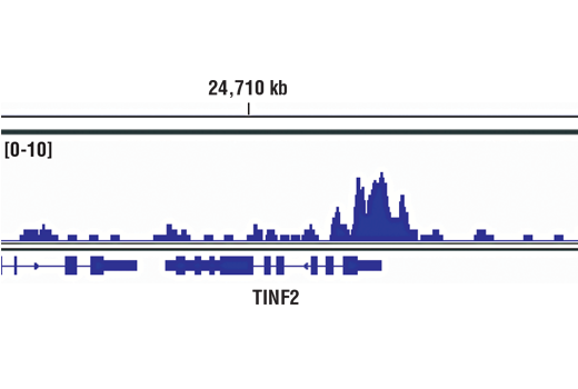 Chromatin immunoprecipitations were performed with cross-linked chromatin from 293 cells and SP1 (D4C3) Rabbit mAb, using SimpleChIP<sup>®</sup> Enzymatic Chromatin IP Kit (Magnetic Beads) #9005. DNA Libraries were prepared using SimpleChIP<sup>®</sup> ChIP-seq DNA Library Prep Kit for Illumina<sup>®</sup> #56795. The figure shows binding across TINF2/TIN2, a known target gene of SP1 (see additional figure containing ChIP-qPCR data). For additional ChIP-seq tracks, please download the product data sheet.