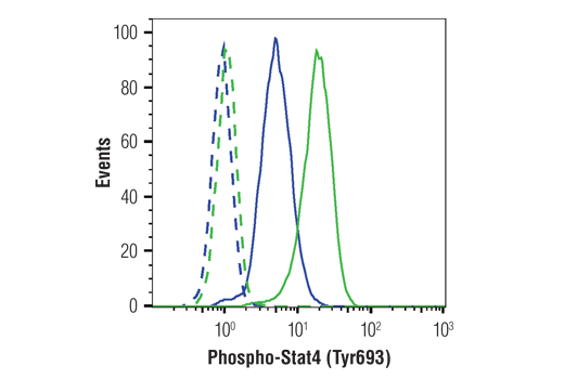 Flow cytometric analysis of NK-92 cells serum starved of Human Interleukin-2 #8907 (5 hr), untreated (blue) or treated with IL-12 (50ng/mL, 1 hr; green), using Phospho-Stat4 (Tyr693) (D2E4) Rabbit mAb (solid lines) or concentration-matched Rabbit (DA1E) mAb IgG XP<sup>®</sup> Isotype Control #3900 (dashed lines). Anti-rabbit IgG (H+L), F(ab')<sub>2</sub> Fragment (Alexa Fluor<sup>®</sup> 488 Conjugate) #4412 was used as the secondary antibody.