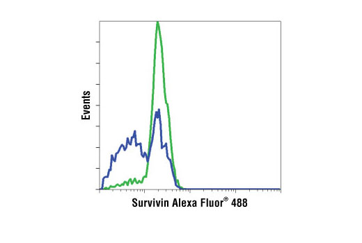 Flow Cytometry Image 1: Survivin (71G4B7) Rabbit mAb (Alexa Fluor® 488 Conjugate)