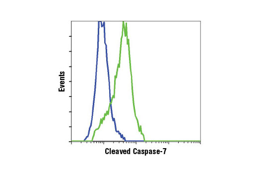 Flow cytometric analysis of Jurkat cells, untreated (blue) or etoposide-treated (green), using Cleaved Caspase-7 (Asp198) (D6H1) Rabbit mAb.