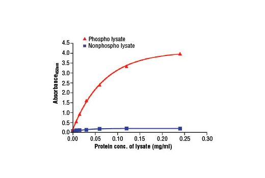 Figure 2. The relationship between protein concentration of phospho or non-phospho lysates and the absorbance at 450 nm is shown. Unstarved K-562 cells were cultured (10<sup>6</sup> cells/ml) and lysed with or without addition of phosphatase inhibitor to the lysis buffer (phospho or non-phospho lysate, respectively).