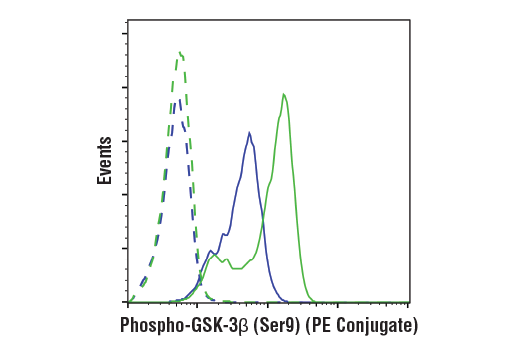 Flow cytometric analysis of NIH/3T3 cells, untreated (blue) or treated with PDGFaa #8913 (200ng/ml, 15 min; green) using Phospho-GSK-3β (Ser9) (D85E12) XP® Rabbit mAb (PE Conjugate) (solid lines) or concentration-matched Rabbit (DA1E) mAb IgG XP<sup>®</sup> Isotype Control (PE Conjugate) #5742 (dashed lines).