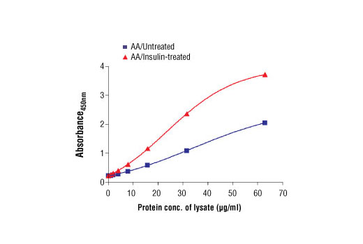 Figure 2: The relationship between the protein concentration of lysate from amino acid (AA)/untreated and AA/insulin-treated HEK-293T and the absorbance at 450 nM is shown.