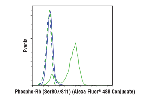 Flow cytometric analysis of BT-549 (blue) and Jurkat (green) cells using Phospho-Rb (Ser807/811) (D20B12) XP® Rabbit mAb (Alexa Fluor® 488 Conjugate) (solid lines) or concentration-matched Rabbit (DA1E) mAb IgG XP® Isotype Control (Alexa Fluor® 488 Conjugate) #2975 (dashed lines).
