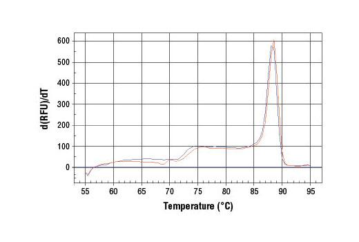 Primer Set - SimpleChIP® Human SLC19A2 Promoter Primers - Chromatin IP, UniProt ID O60779, Entrez ID 10560 #7681, Slc19a2