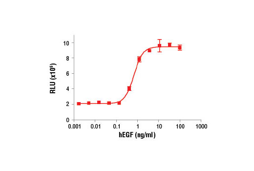 Figure 2. Treatment of MCF 10A cells with Human Epidermal Growth Factor (hEGF) #8916 increases cell proliferation as detected by the BrdU Cell Proliferation Chemiluminescent Assay Kit #5492. MCF 10A cells were seeded at 1x10<sup>4</sup> cells/well in a 96-well plate and incubated overnight. Cells were then starved in serum free medium overnight. hEGF was added to the plate and cells were incubated for 24 hr. Finally, 10 μM BrdU was added to the plate and cells were incubated for 4 hr.