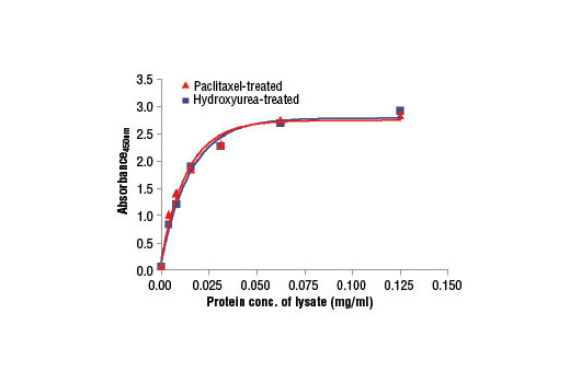 Figure 2. The relationship between the protein concentration of lysates from HeLa cells, treated with Paclitaxel #9807 or hydroxyurea, and the absorbance at 450 nm using the PathScan<sup>®</sup> Total Vimentin Sandwich ELISA Kit is shown.