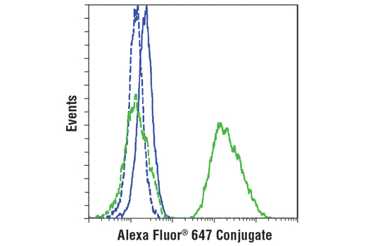 Flow cytometric analysis of Hela cells (blue) and B-TC-6 cells (green) using Insulin (C27C9) Rabbit mAb (Alexa Fluor® 647 Conjugate) (solid lines) or a concentration-matched Rabbit (DA1E) mAb IgG XP<sup>®</sup> Isotype Control (Alexa Fluor<sup>®</sup> 647 Conjugate) #2985 (dashed lines).