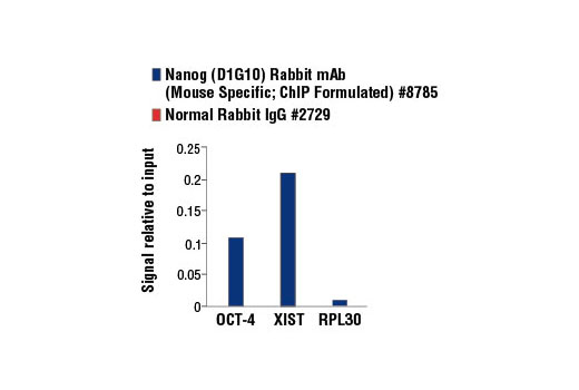 Monoclonal Antibody Chromatin Ip Endodermal Cell Fate Specification