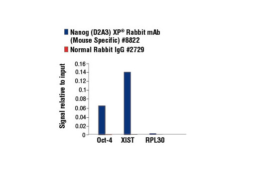 Chromatin Immunoprecipitation Image 2: Nanog (D2A3) XP® Rabbit mAb (Mouse Specific)