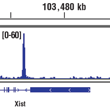 Chromatin immunoprecipitations were performed with cross-linked chromatin from F9 cells and Nanog (D2A3) XP<sup>®</sup> Rabbit mAb (Mouse Specific), using SimpleChIP<sup>®</sup> Plus Enzymatic Chromatin IP Kit (Magnetic Beads) #9005. DNA Libraries were prepared using SimpleChIP<sup>®</sup> ChIP-seq DNA Library Prep Kit for Illumina<sup>®</sup> #56795. The figure shows binding across Xist, a known target gene of Nanog (see additional figure containing ChIP-qPCR data). For additional ChIP-seq tracks, please download the product data sheet.