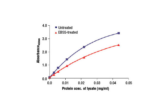 Figure 2. The relationship between protein concentration of lysates from unstarved and EBSS-starved SK-MEL-2 cells and the absorbance at 450 nm is shown. SK-MEL-2 cells (85% confluence) were starved overnight in EBSS at 37ºC and then lysed.