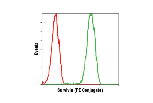 Flow cytometric analysis of Jurkat cells using Survivin (71G4B7) Rabbit mAb (PE Conjugate) (green) compared to concentration-matched Rabbit (DA1E) mAb IgG XP<sup>®</sup> Isotype Control (PE Conjugate) #5742 (red).