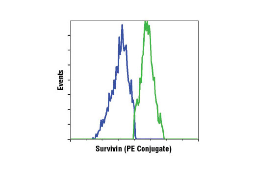 Flow cytometric analysis of camptothecin-treated Jurkat cells using Survivin (71G4B7) Rabbit mAb (PE Conjugate) showing a decrease in survivin expression in apoptotic cells (blue) compared to non-apoptotic cells (green).