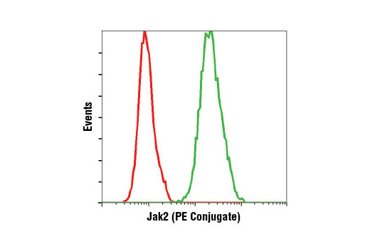 Flow cytometric analysis of K-562 cells using Jak2 (D2E12) XP<sup>®</sup> Rabbit mAb (PE Conjugate) (green) compared to concentration-matched Rabbit (DA1E) mAb IgG XP<sup>®</sup> Isotype Control (PE Conjugate) #5742 (red).