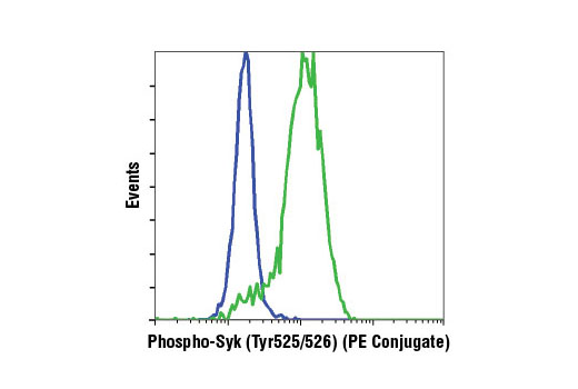 Monoclonal Antibody - Phospho-Syk (Tyr525/526) (C87C1) Rabbit mAb (PE Conjugate), UniProt ID P43405, Entrez ID 6850 #6485 - Immunology and Inflammation