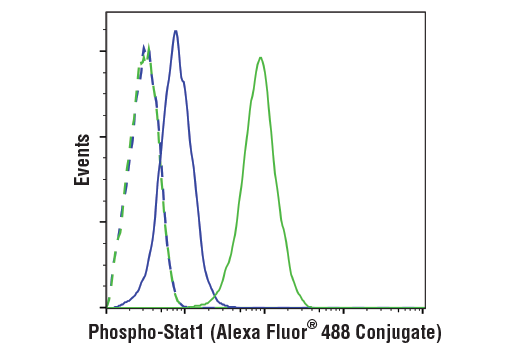 Flow cytometric analysis of Jurkat cells untreated (blue) or treated with IFN-alpha (100ng/ml, 5 min; green) using Phospho-Stat1 (Tyr701) (58D6) Rabbit mAb (Alexa Fluor<sup>®</sup>488 Conjugate) (solid lines) or concentration-matched Rabbit (DA1E) mAb IgG XP<sup>®</sup> Isotype Control (Alexa Fluor<sup>®</sup> 488 Conjugate) #2975 (dashed lines).