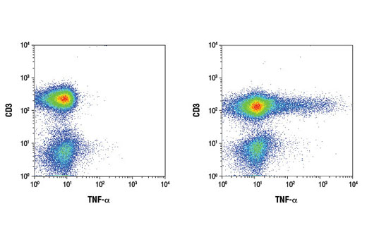 Flow cytometric analysis of human peripheral blood lymphocytes, untreated (left) or treated with TPA #4174 (40 nM, 4 hr), Ionomycin #9995 (2 μM, 4 hr), and Brefeldin A #9972 (1 μg/ml, last 3 hr of treatment) (right), using a CD3 antibody and TNF-α (D1G2) Rabbit mAb (IF/Flow Preferred).