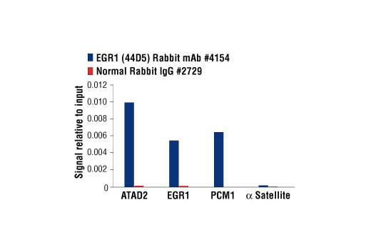 Chromatin immunoprecipitations were performed with cross-linked chromatin from THP-1 cells treated with TPA (12-O-Tetradecanoylphorbol-13-Acetate) #4174 (30ng/ml) overnight and either EGR1 (44D5) Rabbit mAb or Normal Rabbit IgG #2729 using SimpleChIP<sup>®</sup> Enzymatic Chromatin IP Kit (Magnetic Beads) #9003. The enriched DNA was quantified by real-time PCR using human ATAD2 promoter primers, SimpleChIP® Human EGR1 Promoter Primers #5549, human PCM1 promoter primers, and SimpleChIP<sup>®</sup> Human α Satellite Repeat Primers #4486. The amount of immunoprecipitated DNA in each sample is represented as signal relative to the total amount of input chromatin, which is equivalent to one.