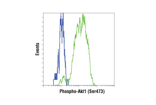 Flow cytometric analysis of Akt1 (-/-) mouse embryonic fibroblast (MEF) cells (blue) or Akt2 (-/-) MEF cells (green), PDGF-treated (100 ng/mL, 15 min), using Phospho-Akt1 (Ser473) (D7F10) XP<sup>®</sup> Rabbit mAb (Akt1 Specific). Anti-rabbit IgG (H+L), F(ab')<sub>2 </sub>Fragment (Alexa Fluor<sup>®</sup> 488 Conjugate) #4412 was used as a secondary Ab.