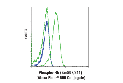 Flow cytometric analysis of BT-549 cells (blue) and Jurkat cells (green) using Phospho-Rb (Ser807/811) (D20B12) XP® Rabbit mAb (Alexa Fluor® 555 Conjugate) (solid lines) or a concentration-matched Rabbit (DA1E) mAb IgG XP<sup>®</sup> Isotype Control (Alexa Fluor<sup>®</sup> 555 Conjugate) #3969 (dashed lines)