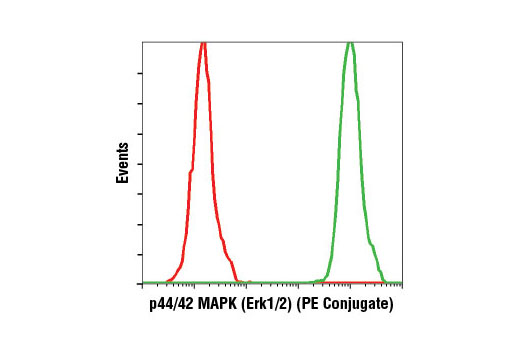 Flow cytometric analysis of Jurkat cells using p44/42 MAPK (Erk1/2) (137F5) Rabbit mAb (PE Conjugate) (green) compared to concentration-matched Rabbit (DA1E) mAb IgG XP<sup>®</sup> Isotype Control (PE Conjugate) #5742 (red).