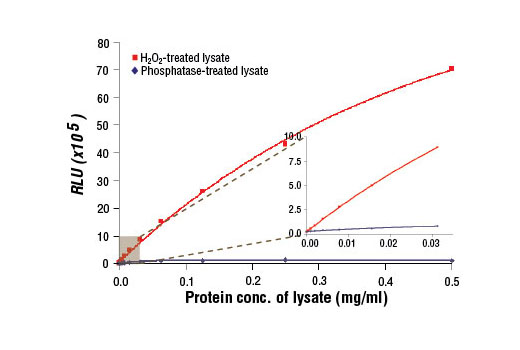 Figure 1: Relationship between protein concentration of lysates from phosphatase-treated and H<sub>2</sub>O<sub>2</sub>-treated C2C12 cells and immediate light generation with chemiluminescent substrate is shown. C2C12 cells (80-90% confluent) were treated with H<sub>2</sub>O<sub>2</sub> (10 mM, 10 min, 37ºC). Graph inset corresponding to the shaded area shows high sensitivity and a linear response at the low protein concentration range.
