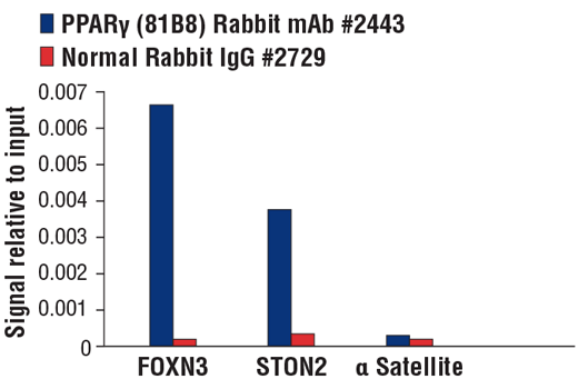 Chromatin immunoprecipitations were performed with cross-linked chromatin from HDLM-2 cells and either PPARγ (81B8) Rabbit mAb or Normal Rabbit IgG #2729 using SimpleChIP® Plus Enzymatic Chromatin IP Kit (Magnetic Beads) #9005. The enriched DNA was quantified by real-time PCR using SimpleChIP® Human FOXN3 Intron3 Primers #95568, STON2 intron 4 primers, and SimpleChIP® Human α Satellite Repeat Primers #4486. The amount of immunoprecipitated DNA in each sample is represented as signal relative to the total amount of input chromatin, which is equivalent to one.